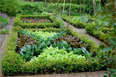 edible landscapes integrating food plants as design features sow